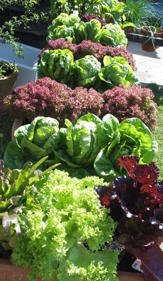 Deli Truck, salads, summer
